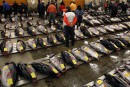 Le célèbre marché aux poissons de Tokyo déménagera