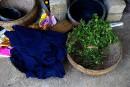 Des bactéries pour des «blue jeans» plus verts