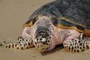 Madagascar: 8 enfants morts après avoir mangé une tortue marine