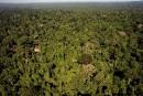 Un énorme réseau d'exportation illégale de bois démantelé en Amazonie