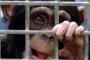 Tests diesel sur humains et animaux: «rien d'extraordinaire»