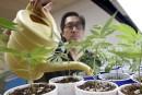 Cannabis: Ottawa tient à la culture à domicile