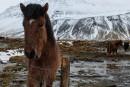 Islande:mieux vaut bien organiser son séjour