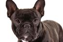 Un chien meurt dans un compartiment à bagages d'un avion de United Airlines