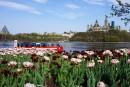 Festival des tulipes et printemps à Ottawa