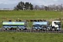 L'industrie du lait néo-zélandaise montrée du doigt pour la pollution