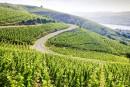 Déjà deux alertes sécheresse en vallée du Rhône