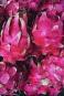 De flamboyants pitayas, ou fruits du dragon, ornent les embarcations.... | 11 mai 2018