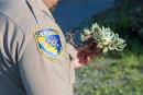 Des plantes rares arrachées en Californie pour en faire la contrebande en Asie