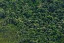 Greenpeace met fin à sa relation avec le géant forestier Sinar Mas