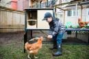 Poc Poc: poulailler design pour cocottes urbaines