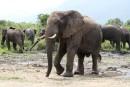 Le parc des Virunga fermé aux touristes jusqu'à la fin de l'année