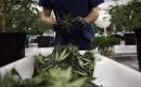 Cannabis: Ottawa évite une confrontation avec des sénateurs autochtones