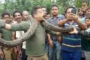 Il pose avec un python et... se fait presque étrangler