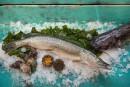 Nos poissons absents de nos assiettes