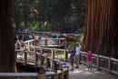 La forêt de séquoias géants de Mariposa rouvre après restauration