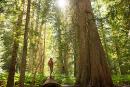 Les arbres comme remède antistress