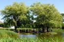 Pique-niques: festins sur l'herbe