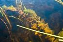 Plantes envahissantes: Québec investit 8millions