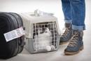 AirTransat ouvre ses cabines aux animaux de compagnie