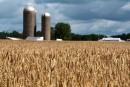 Flambée du prix du blé