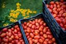 Conserves maison: faire la fête à la tomate