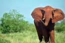 En Afrique, le braconnage inquiète les professionnels du tourisme