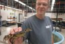 Des crabes de la N.-É. menacent l'écosystème côtier duMaine