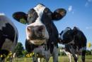 Trudeau et Legault s'engagent à appuyer les producteurs de lait