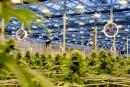 Industrie du cannabis: le Québec à la traîne