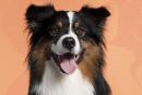 5 chiens bienfaiteurs