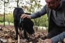 Italie: les chiens truffiers ont leur «université»