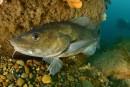 Oceana Canada réclame un suivi des stocks de poissons