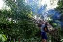 Nouvelle norme pour l'huile de palme durable