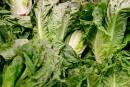 <em>E. coli</em>: les supermarchés retirent les laitues romaines