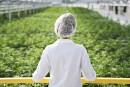 Cannabis: un rapport fait plonger le titre d'Aphria