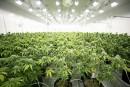 Aurora Cannabis achète Farmacias Magistrales