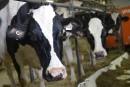 Guide alimentaire: Trudeau doit intervenir, croient les producteurs laitiers