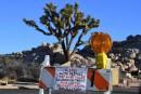 Shutdown: le parc de Joshua Tree va fermer temporairement