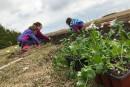 Projet de famille: jardiner pour voyager