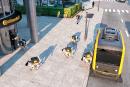 CES : le chien-robot qui guette le facteur