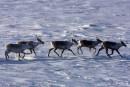 Le Canada inquiet des projets de forage dans l'Arctique