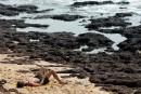 La fin des partys sur la plage de Goa...