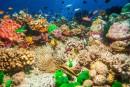 Jean-Michel Cousteau: protéger les océans pour se protéger soi-même