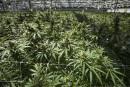 Aphria rejette une offre de Green Growth Brands