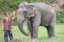 Rencontrer les éléphants éthiquement en Thaïlande
