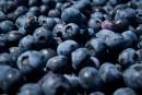 Les bleuets feraient baisser la pression artérielle, selon une étude