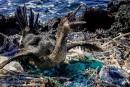 Le plastique menace toute vie aux Galapagos
