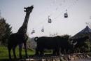 Le zoo de Beauval se dote de télécabines pour survoler les animaux