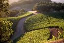 Les ventes des vins américains en baisse au Québec